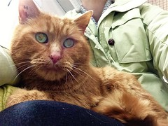 Google - 8 year old neutered male