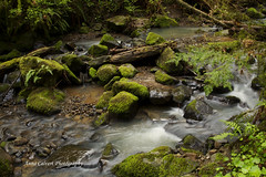 Forest Park, Portland Oregon (Anna Calvert Photography) Tags: trees nature overgrown oregon creek river portland landscape moss scenery stream unitedstates hike ferns forestpark hikingtrail macleaypark