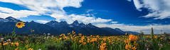 Grand Teton Flower Field (TheMichaelMcKenzie) Tags: park flowers panorama landscape grand national wildflowers wyoming teton