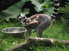 Zoo de beauval (sOoZ__) Tags: de zoo berry panda indre centre val cher koala animaux region et loire parc oiseaux serre loiret beauval animalier australienne
