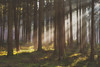 This Must Be The Place (Stefan (ON/OFF)) Tags: forest raysoflight nature light sunlight sunrays sunray tree trees timber woods woodland timberland duff soil moose green brown autumn fall herbst winter lichtstrahlen lichtdurchflutet floodedbylight mood licht sonne sun sony sonya7 sonya7ii sonya7markii sonya7m2 sel55f18z 55mm