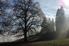 mystic mayestic (picturesbywalther) Tags: mystic mayestic landscape landschaft tree baum bume nature fog nebel dunst dusty winter december