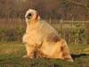 """but I was very brave"" (Sharon B Mott) Tags: polarbear projectpolar savethepolarbears carnivour preditor awesome animal yorkshirewildlifepark"