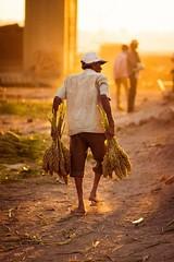 Pok (Harshal Orawala) Tags: pok food surat gujarat light toi golden travel