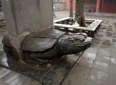 DSC_9183 (H Sinica) Tags: 少林寺 河南 henan shaolinmonastery temple stele 赑屃 石碑