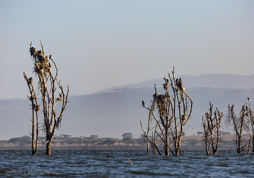 Boat ride on Lake Naivasha