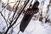 _DSC0111_edited (sanctifiedweavingco) Tags: paracord knives photography alaska tree winter snow gear beauty survival outdoors outside forest