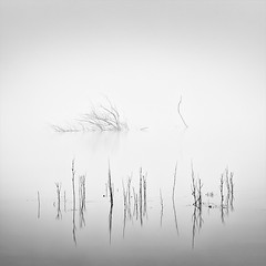 Death in the Swamp (DavidFrutos) Tags: davidfrutos albacete pantano laguna lagoon swamp waterscape water agua niebla fog foggy monochrome monocromo reflejos reflections canondslr 5dmarkii longexposure largaexposición le lee nature naturaleza landscape blackwhite bw bn square fineart silverefexpro2 canon 70200mm