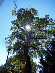 Sun through a tree, 2016 Aug 27 -- photo 2 (Dunnock_D) Tags: czechia czechrepublic prague blue sky garden gardens royalgarden královskázahrada malástrana lessertown
