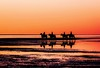 riding into the sunset (claudia.kiel) Tags: deutschland germany nordsee northsea stpeterording spo sonnenuntergang sunset sunsetmood pferde horses spiegelung silhouette reflection landschaft landscape nature