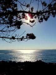 DSC01519 (llicela) Tags: tome trespinos nature tree beach playa summer sol enero