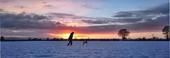 Handschuhdiebpanorama (Günter Hickstein) Tags: panorama landscape landschaft lagotto lagottoromagnolo lowersaxony günterhickstein germany ludwig dog deutschland snow schnee pet puppy tree sun sundown sunset sunlight sky himmel wolken clouds running run field feld winter wasserhund italienischerwasserhund uelzen vacation urlaub summer sommer