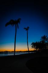 Bahamas-002.jpg (ajdoudt) Tags: patrick morning sunrise beautiful roper palmtree wedding vacation shannon bahamas shanny