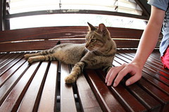 () Tags: cat