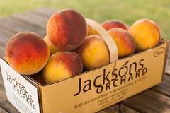 Flaming Fury--4 (Jackson's Orchard) Tags: kentucky peach orchard bowlinggreen bowlinggreenky jacksonsorchard flamingfury