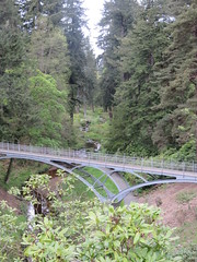 Bridge (spaceyt29) Tags: bridge trees forest top20bridges