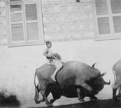 02_Minya - Egyptian Boy on Buffalo (usbpanasonic) Tags: boy buffalo northafrica muslim islam egypt culture nile cairo nil egypte islamic minya مصر caire moslem egyptians misr qahera masr egyptiens kahera