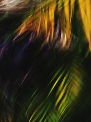Runaway (raf_h) Tags: art nature contrast outdoors movement colorful abstractart fineart vivid windy 365 palmfrond conceptualart 311365