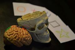 Parapsychological (rosefwaugh) Tags: life cards skull still brain zener parapsychological randomwordproject