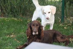Cosette_190 (leeder-five) Tags: cosette rin pflegehund