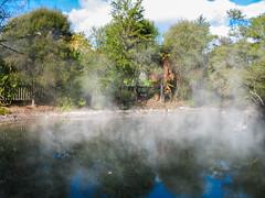 148 - Plan d'eau en vapeur à Rotorua