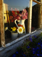 Flowers in the Window (cycle.nut66) Tags: flowers light sunset last island four evening cut shed olympus holy national trust jug gertrude zuiko jekyll potting thirds e510