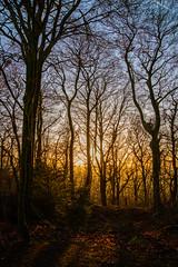 Westridge Woods (Matt Bigwood) Tags: westridge woodland gloucestershire wottonunderedge nikond800 2485