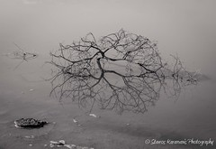 plainness beauty (stavros karamanis) Tags: blackandwhite bw blacknwhite tree water reflection shadow deadwood simlicity lake canonusers canonphotography dslr canon t3i ef35350mmf3556lusm abstract cyprus ngc outdoor plant