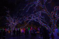 121016-6 (kara_muse) Tags: christmaslights vitruvianpark