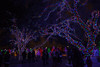 121016-6 (kara_muse) Tags: christmaslights vitruvianpark