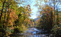 Ohio River (Darshan Simha) Tags: the smoky mountains great fall gatlinburg pigeon forge river outdoor rock tree plant landscape foliage forest serene ohio tennessee