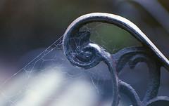 breathe (m_travels) Tags: mood wabisabi analogue macro spider web breathe depthoffield 35mmfilm lomography400film inaugurationday simple argentique
