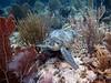 Turtle City (Wim Bollein) Tags: eastcoastdiving turtlecity bonaire dutchcaribbean caribbean underwater underwaterparadise uwphotography ocean bluewaters coral seaturtle reef scuba diving divingparadise diversparadise