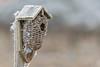 Nobody Home (Natural Photography by CJH) Tags: winter garden garten ice cold freeze frozen nikon d500 telephoto 300mm pf f4 300mmf4 300f4 nikkor pfedvr bird birdhouse nest nestbox