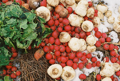 Colorful Compost Pile (Nsharp17) Tags: canon canonae1 35mm film kodak ultramax ultramax400 red green compost beets vegetables rootvegetables farm burlington vermont burlingtonintervale
