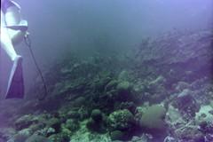 n0005.07 (avaragado) Tags: barbados coralreefclub fd197504 fd197604 fd197905 n0005 tonysmith