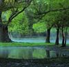 PARAÍSO. (NIKONIANO) Tags: paisajes paisaje paisajedemichoacán camécuaro camecuaromichoacan ahuehuete ahuehuetedemoctezuma surreal green naturesfinest ontheroad tangancícuaro sunrise paisajemexicano trees follaje verde verano