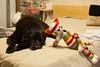 lounging buddies (Yutaka Seki) Tags: lab labrador retriever blacklab dog chien perro cat kitty gato chat meow crochet yarn rainbow colourful toy amigurumi catanddog