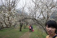 DSC_1210 (chenjn) Tags: d600 nikon 2470mm 妖怪村 柳家梅園 taiwan 信義鄉 梅花
