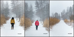 Solitude (CecilieSonstebyPhotography) Tags: solitude alone snow winter fallingsnow trees tree path january woman man