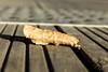 Feuille morte (Thierry Poupon) Tags: automne boulogne ileseguin seine terrasse bois feuille boulognebillancourt iledefrance france fr brun brown leaf fall automn