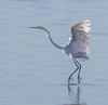 On Pointe / En Pointe (SDRPhoto321) Tags: art animal botanical bird birds birding black bill bright dof dark depthoffield canon color colorful cloud depth eos expression eye elevated eyes exposure egret florida feathers gold haven inspiring inspire light lands line mighty new nature outdoor perspective reflection sunny tree