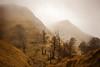 Eskanda (arbioi) Tags: canon euskalherria eos40d gr12 iraty irati paisaje errotzate montaña montañas menditzar navarra nafarroa naturaleza nieblas niebla pirineo pyrenees pyrenee pirineos orbaiceta orbaizeta orbaitzeta arboles arpea