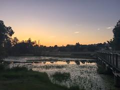 IMG_7405-2 (Noel Roberts) Tags: narangba queensland australia au visitmoretonbayregion birds backyardbirds sunrise dawn lake playground scenic beautiful norfolklakes lorikeets