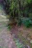 山中遊051 (kingston Tam) Tags: moss grass path hillside hiking field bigtree oddtree garden nature fujifilmxt1