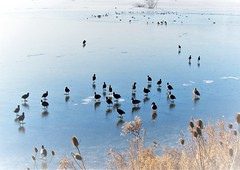 Cold Feet (CosmoClick) Tags: wow ice cold hole cosmoclicky cosmoclick winter ducks