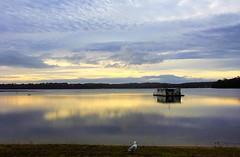 Life at sea (rachFNQ) Tags: tasmania boat houseboat sea bay water seascape serene sunset reflection evening glow beautiful clouds cloudscape sthelens australia travel travelphotography seagull bird gull birdseyeview