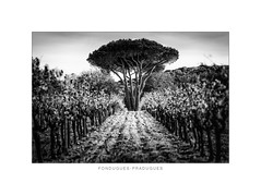 Fondugues Pradugues I (::YS::) Tags: fondugues pradugues vineyard yann savalle yannsavalle domaine ramatuelle winery vin viticole saint tropez france vignoble provence sainttropez bio farming pampelonne beach biodynamic organic wine noir et blanc monochrome bordure photo