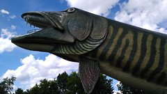 muskie - definition and meaning