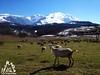 La vita pastorale sulla Majella - Abruzzo - Italy